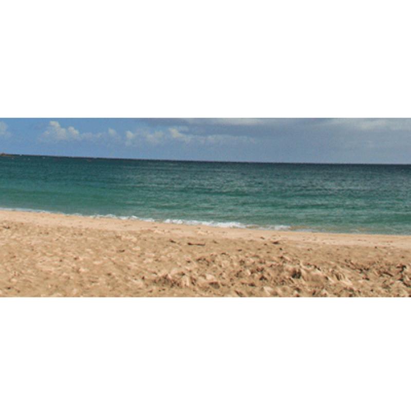 Pro-Viz Sand and Seashore Texture Samples